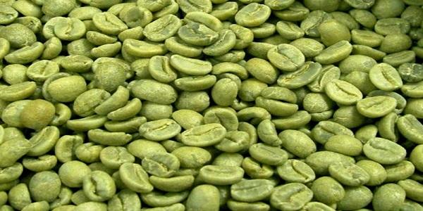 پخش دانه خام ارزان قهوه