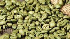 پخش عمده دانه قهوه خام
