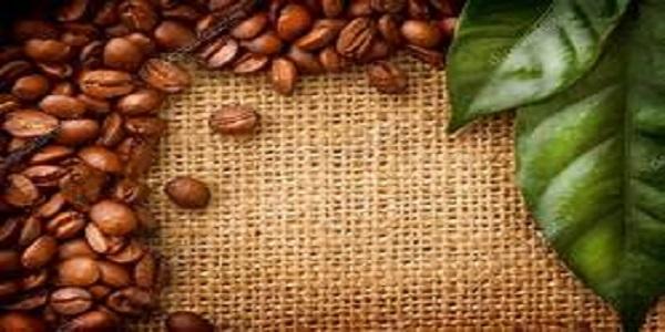 پخش عربیکا قهوه