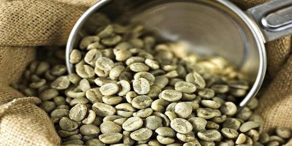 فروش دان قهوه خام