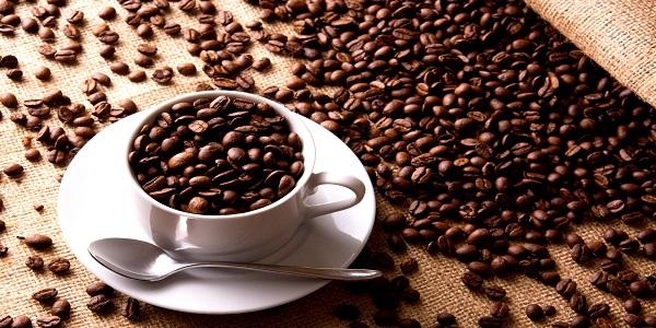 فروش دانه قهوه عربیکا و روبوستا