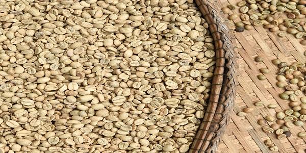 بهترین فروش دانه قهوه خام