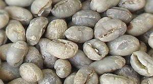 مراکز فروش عمده دانه قهوه خام
