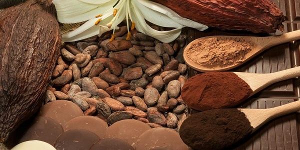 فروش عمده پودر کاکائو و دانه خام کاکائو