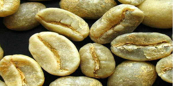 خرید دانه خام قهوه از وارد کننده