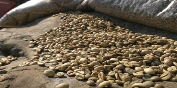 بهترین دانه قهوه برای تولید اسپرسو