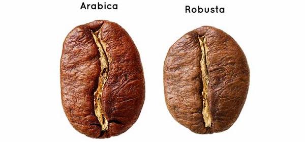 قیمت قهوه عربیکا و روبوستا