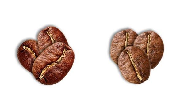 قهوه عربیکا روبوستا عمده